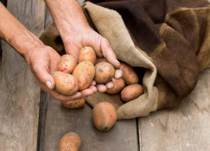 Хранение картофеля в мешках, при котором натуральная мешковина служит хорошим материалом для сохранения тепла и создания необходимой воздушной циркуляции